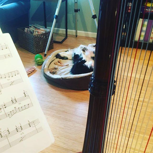 My audience #harp#salviharps #bordercollie #willamettevalley #music
