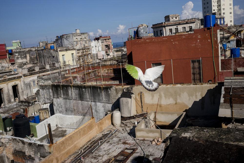 Matteo_Capellini_Cuba_Website (23 of 23).jpg