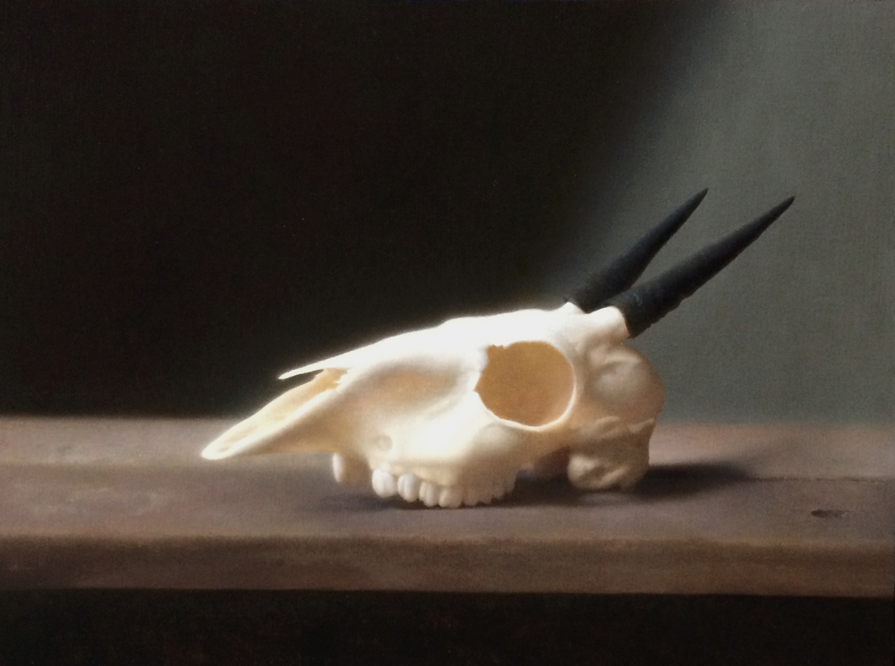 "Devin Cecil-Wishing, ""Duiker Skull"", oil on linen mounted to panel, 11x14 in"