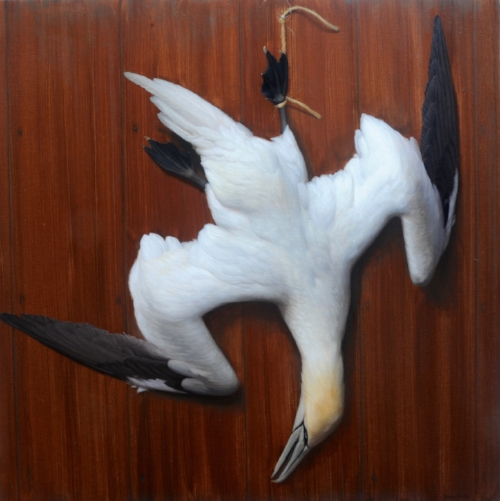 Brendan Johnston   Diving Northern Gannet  40 x 40 in oil on linen