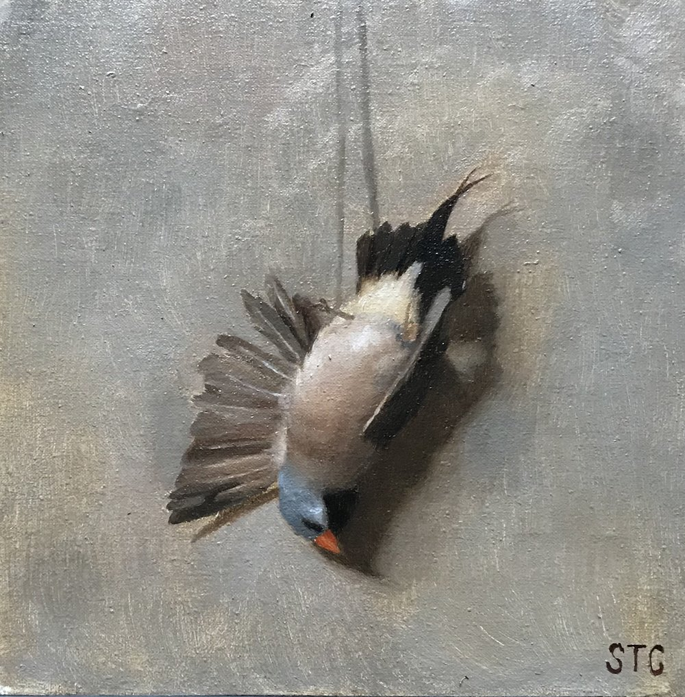 Shaft Tail Finch  by Savannah Tate Cuff, 2018 12 x 9 in, oil on linen