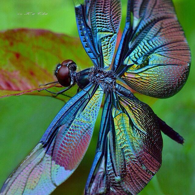 dragonfly17.jpg