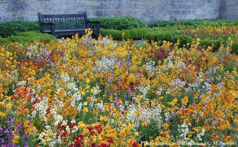 Garden in Bloom -Château de blérancourt