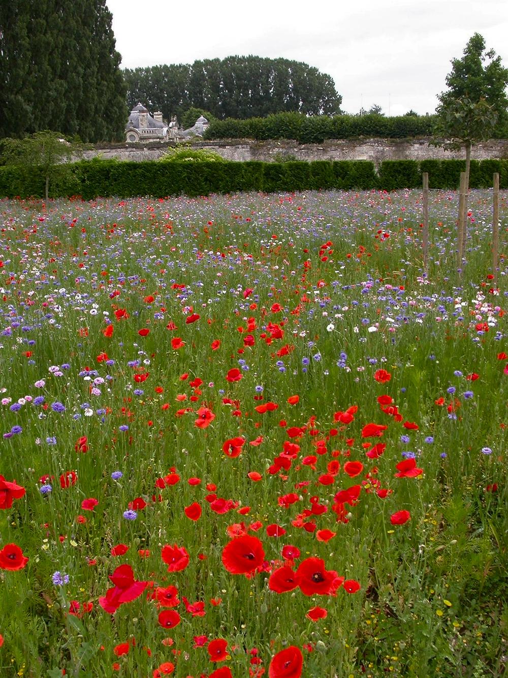 Red White Blue Field –CHÂTEAU DE BLÉRANCOURT