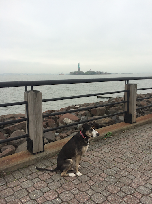 Molly being as regal as possible in front of Lady Liberty.