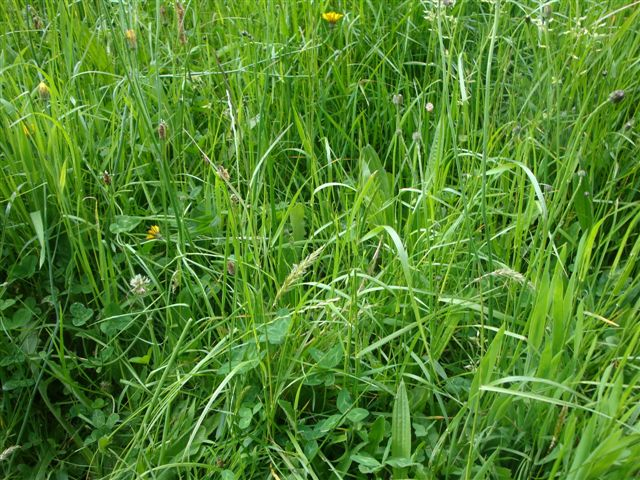 Diverse plant growth in the pastures
