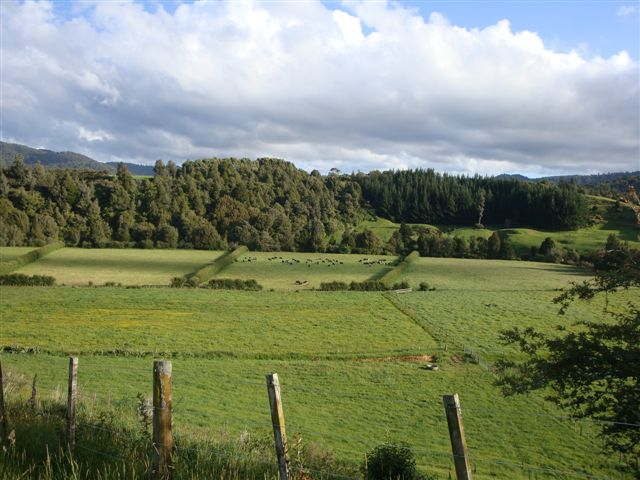 Paddocks in the lower part of the farm