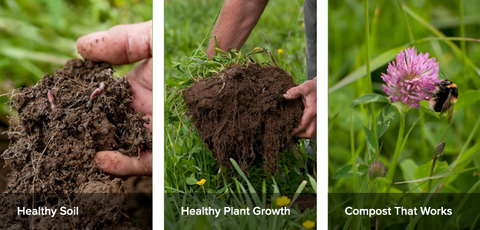 Healthy soil, plant growth and compost.