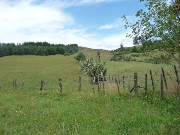Can you spot the difference? On the left of the fence is Chaos Springs, and on the right, our neighbour, who uses conventional pasture methods.