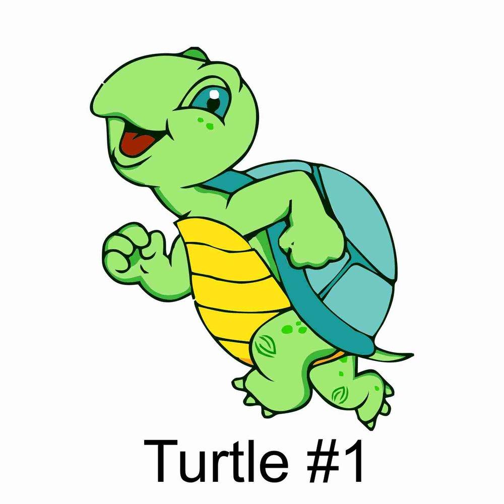 Turtle #1.jpg