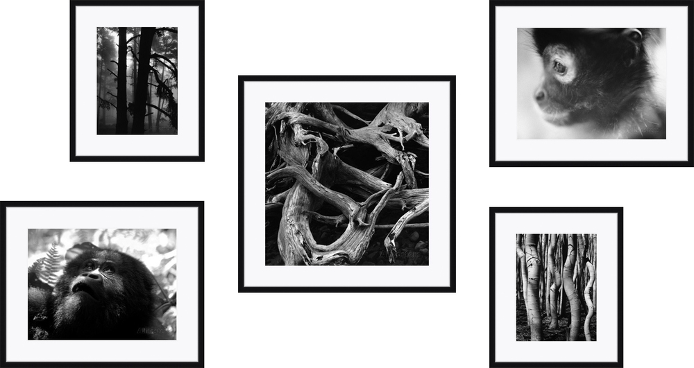 Artist Credit: Brett Weston, Beverly Joubert, Henry Horenstein  Framing Credit: Framebridge