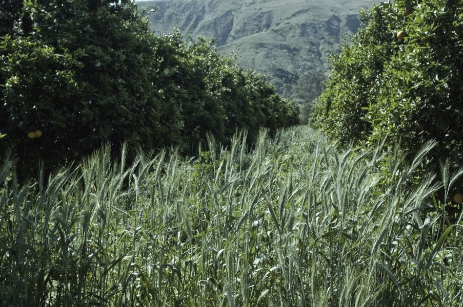 cover crop 1.jpg