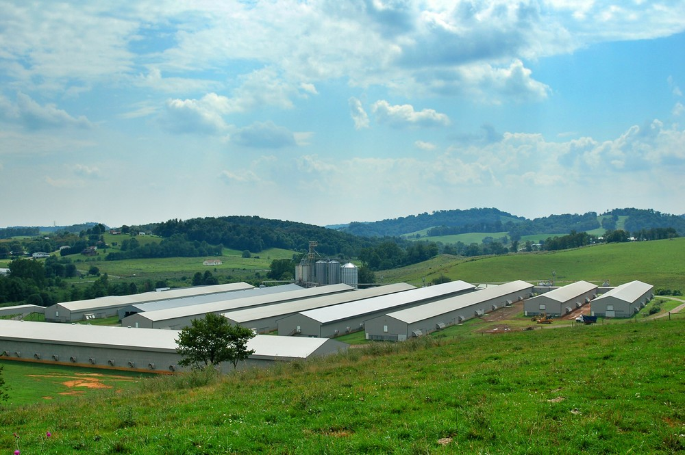 Green Valley  Poultry Farm