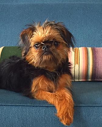 Brooke's canine companion #2