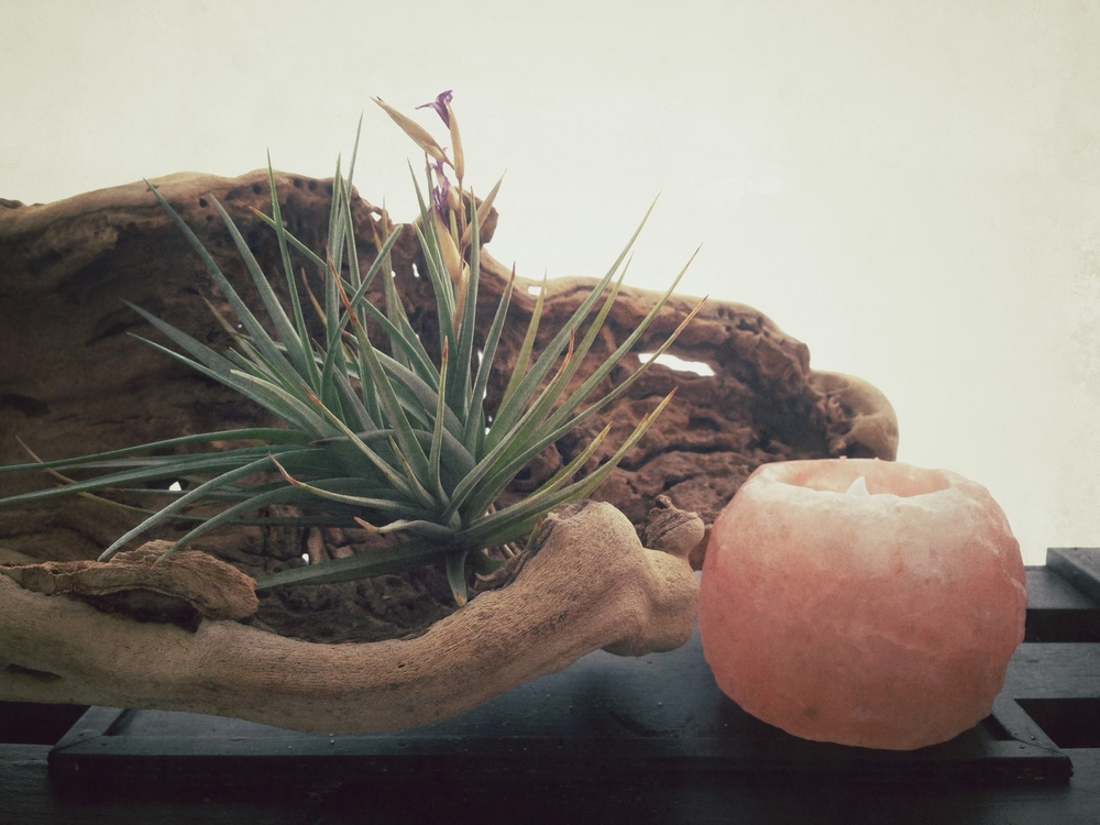 Copy of Candice Sardella Studio Air Plant