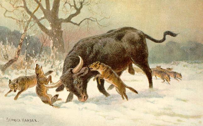 Long_horned_european_wild_ox.jpg