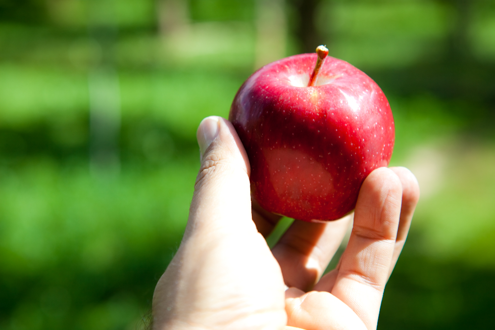 The age-old symbol of temptation: the apple. Photo by Flickr user Beshef