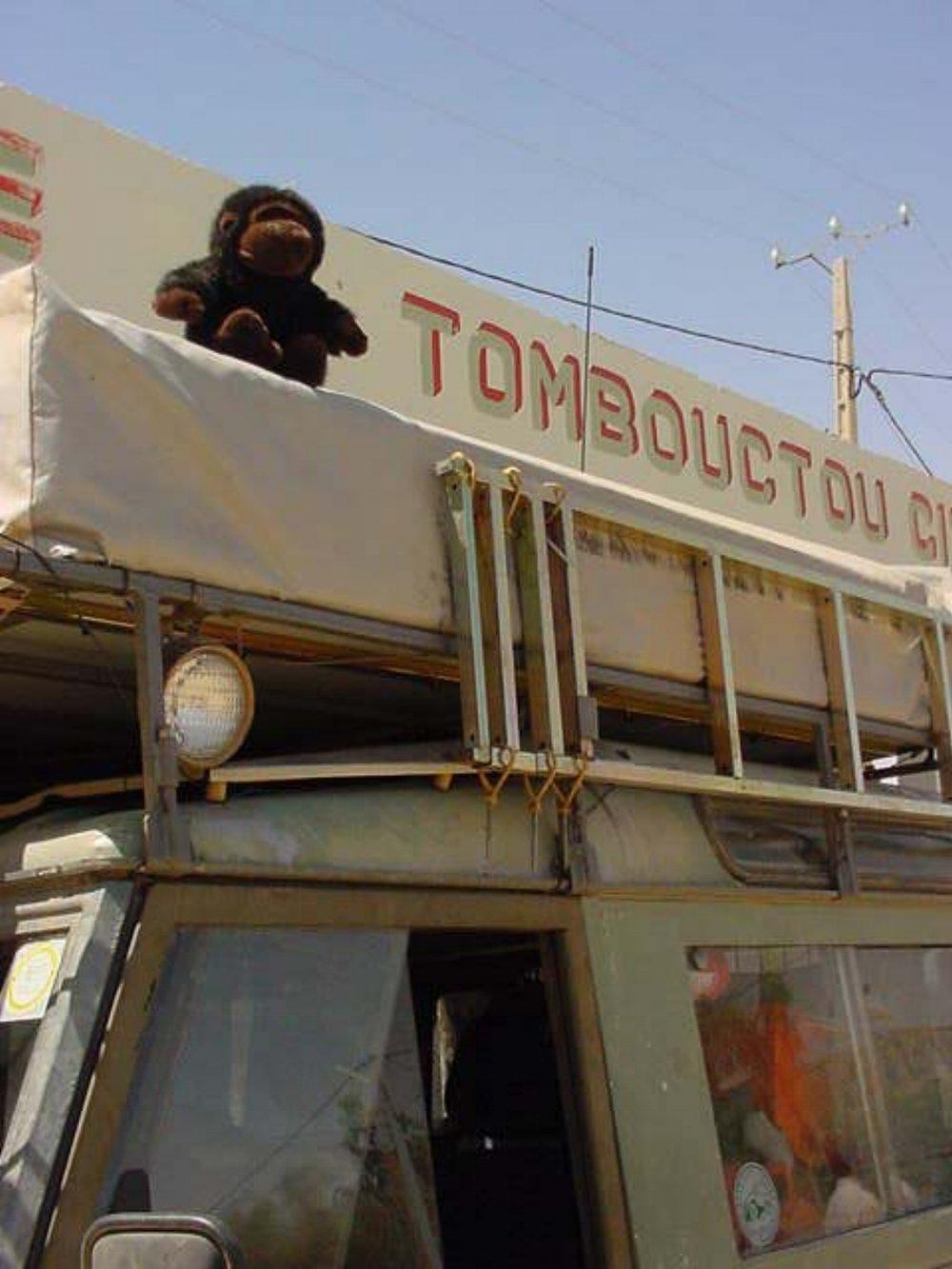 Is that a monkey? | Timbuktu Mali