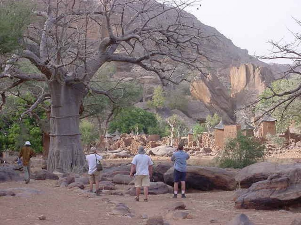 A Baobob tree with Dogon homes in the background