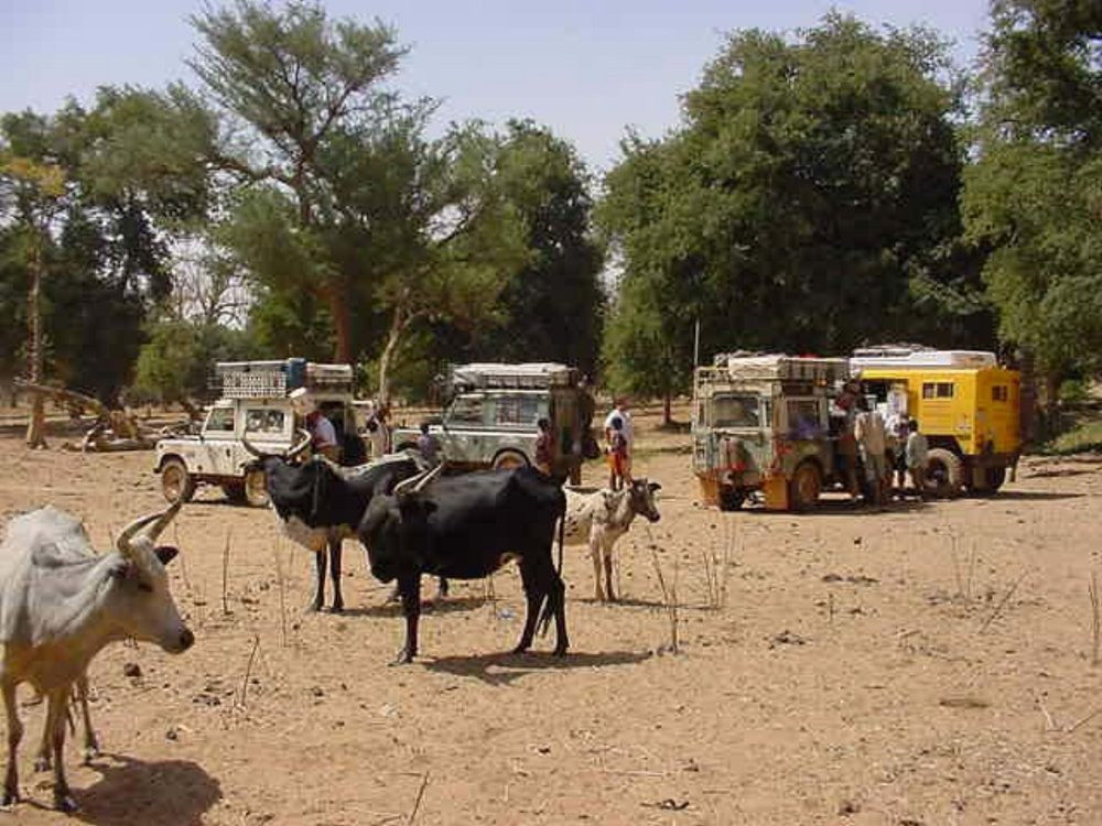 Drive The Globe Expedition vehicles with the local Dogon live stock