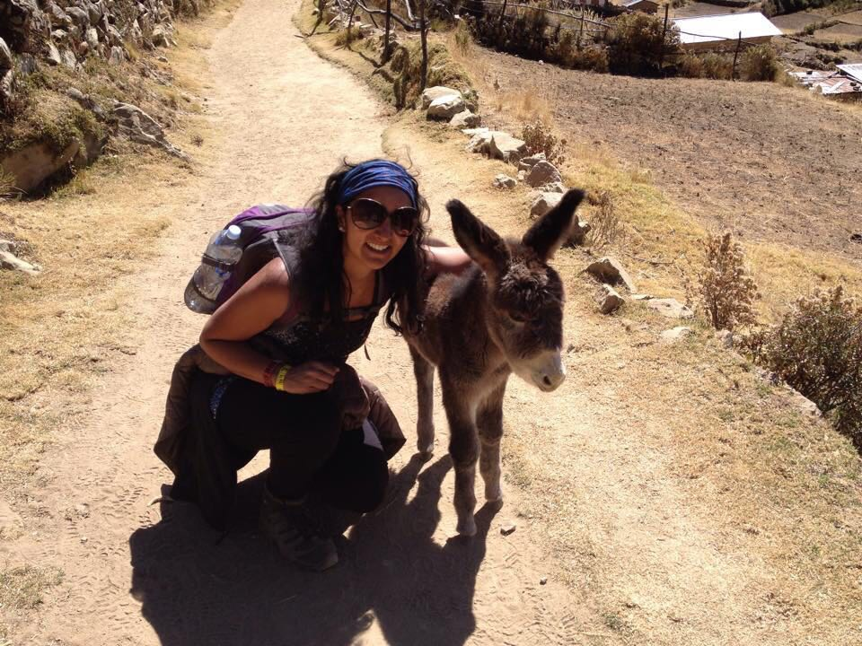 ask-a-traveler-preeti-pandya-small-donkey.jpg