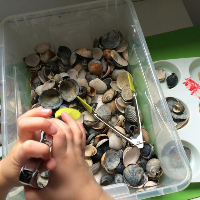 shellsbox.jpg