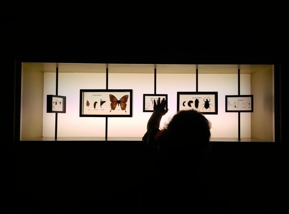 melbournemuseum02.jpg