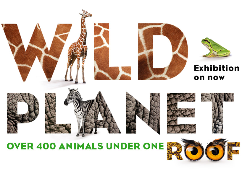 Wild Planet at the Australian Museum - photo credit: Australian Museum