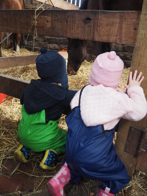 collingwoodchildrensfarm10.jpg