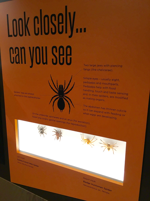 australianmuseumspiders03.jpg