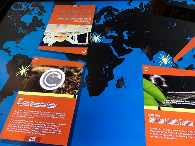 australianmuseumspiders13.jpg