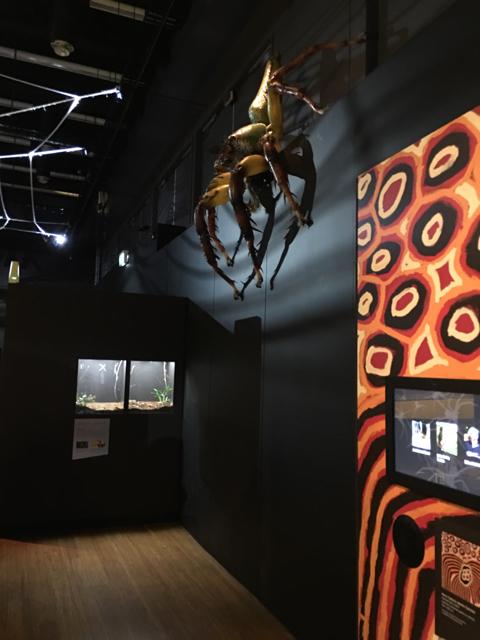 australianmuseumspiders14.jpg