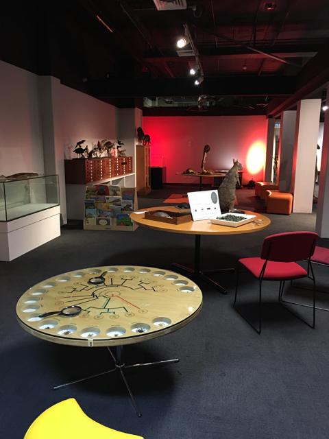 australianmuseum04.jpg