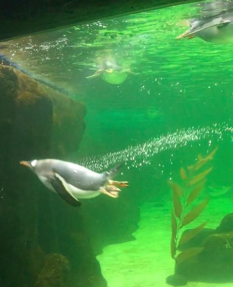 sealifesydneyaquarium02.jpg