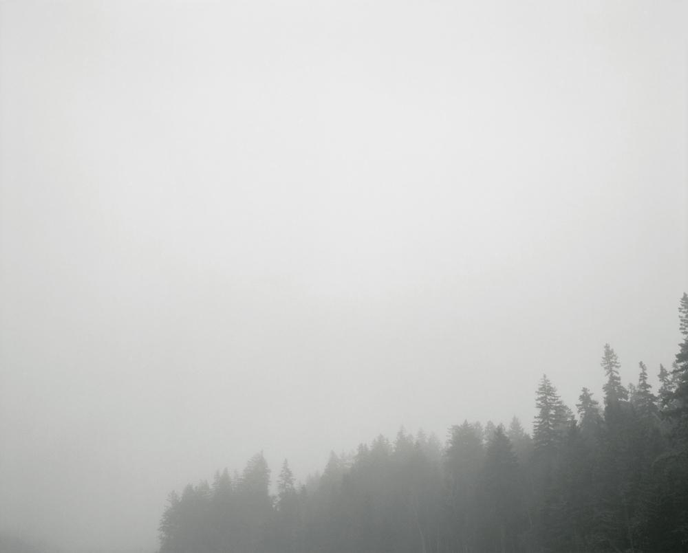 Foggy treetops Schoodic 300a.jpg