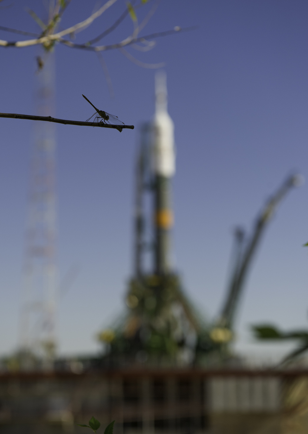 A dragonfly lights on a tree branch near the launch pad after the Soyuz TMA-05M is rolled to its launch pad at the Baikonur Cosmodrome, Thursday, July 12, 2012 in Kazakhstan. The launch of the Soyuz rocket is scheduled for the morning of July 15 local time. (NASA/Carla Cioffi)