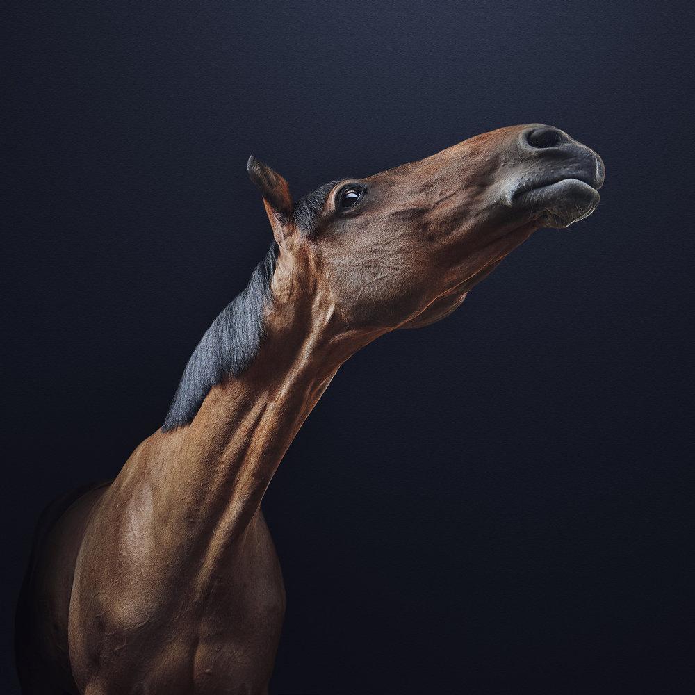 horse 6 final.jpg