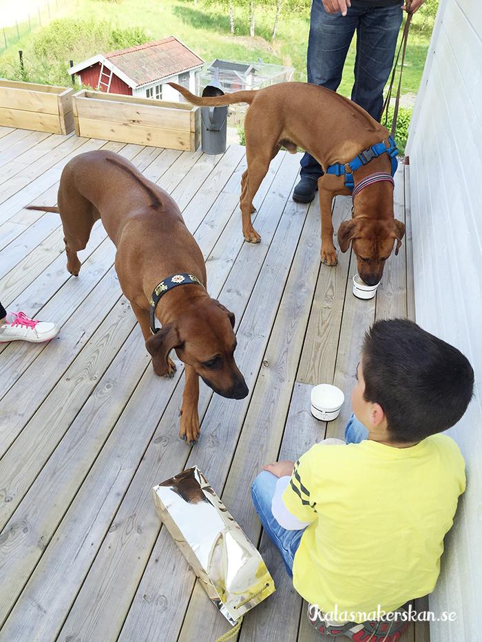 Även Elwin och Ellie njöt i fulla drag av glassen i värmen.