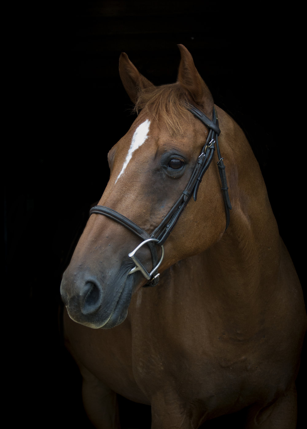 Birthday: 2002 Breed: Thoroughbred Gelding Color: Chestnut Height: 16.1 hands Discipline: Hunter Jumper  Show Name: Why the Buzz Donated by: Renae Flanagan