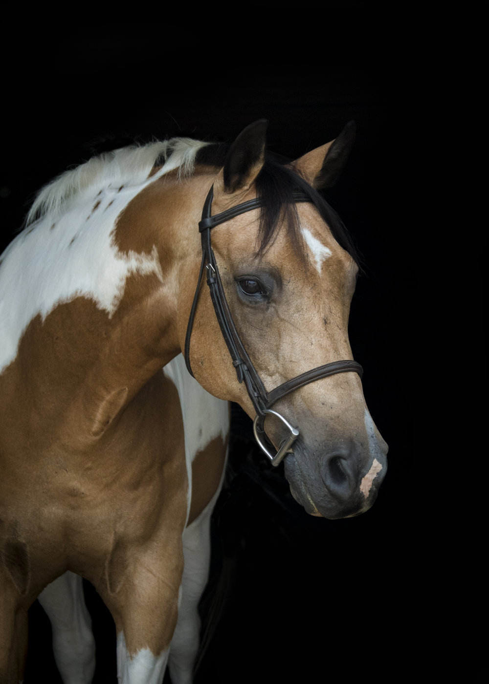 DORITO Birthday: 1993 Breed: Pinto Gelding Height: 15.2 hands Donated by: Andrea Davey