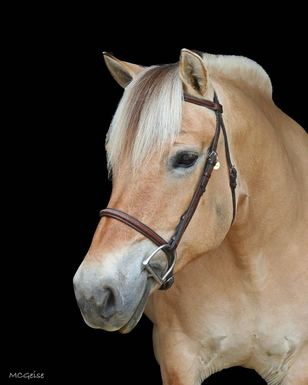 Birthday: May 28, 2003 Breed: Norwegian Fjord Mare Color: Brown Dun Height: 14.2 hands Discipline: Pleasure Show Name: Minnie Sterjna Donated by: Sheila and John Tweedie