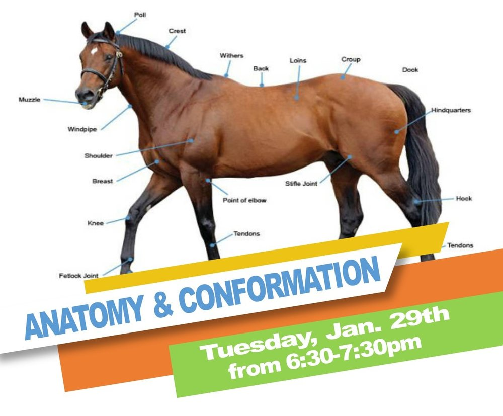 The first Volunteer CEU is Anatomy & Conformation on 1/29 @ 6:30pm