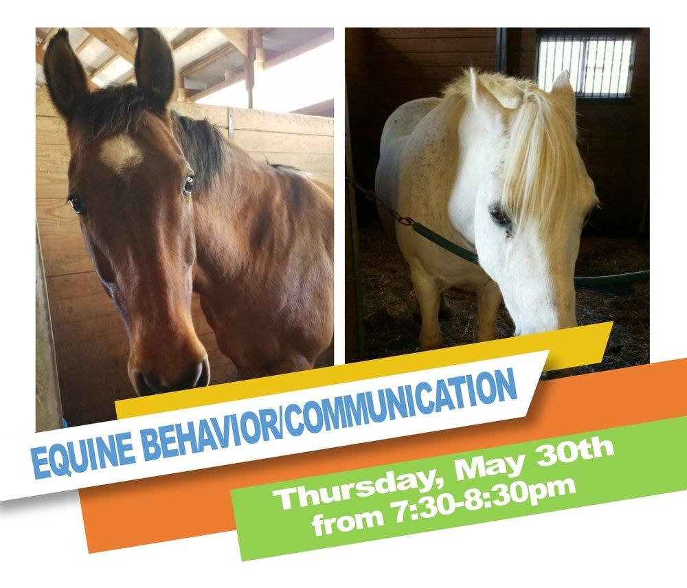 Horse Behavior 2019.jpg