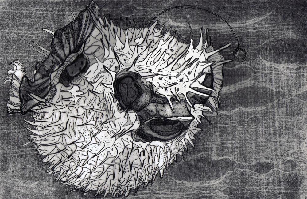 singleblowfish2.jpg