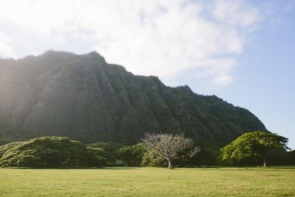 1-oahu-Hawaii2014-10A0364.jpg
