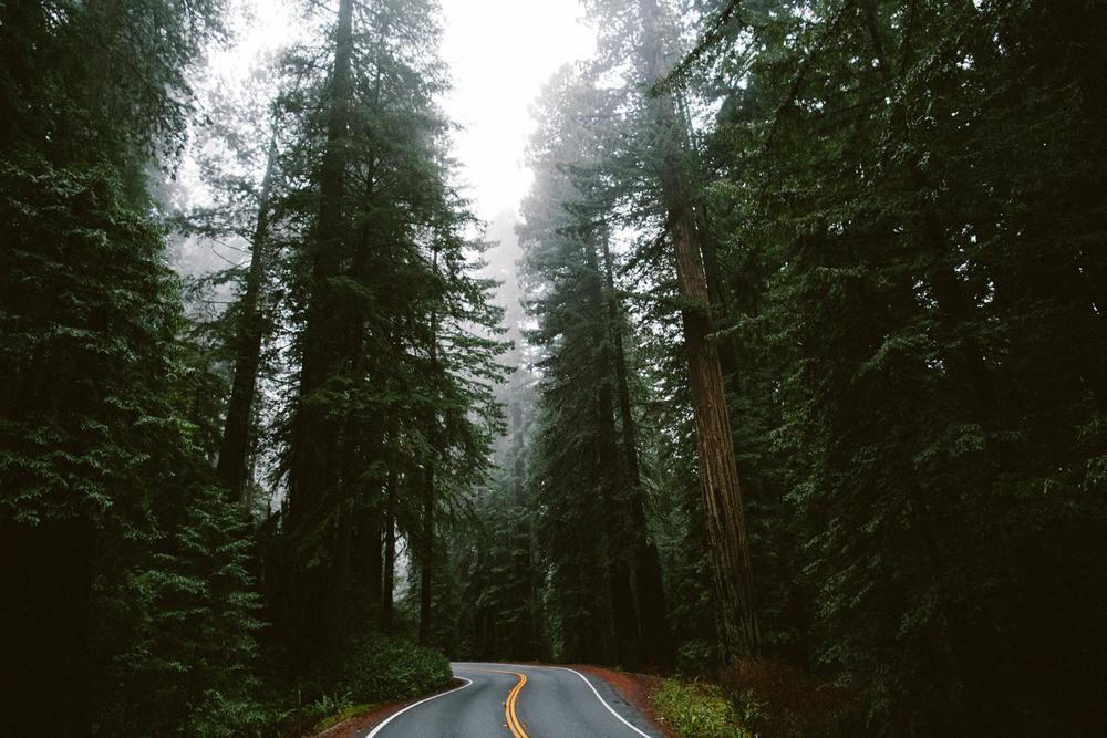 OregonTrip-www.celinehamelin.com-_O1B1934.jpg