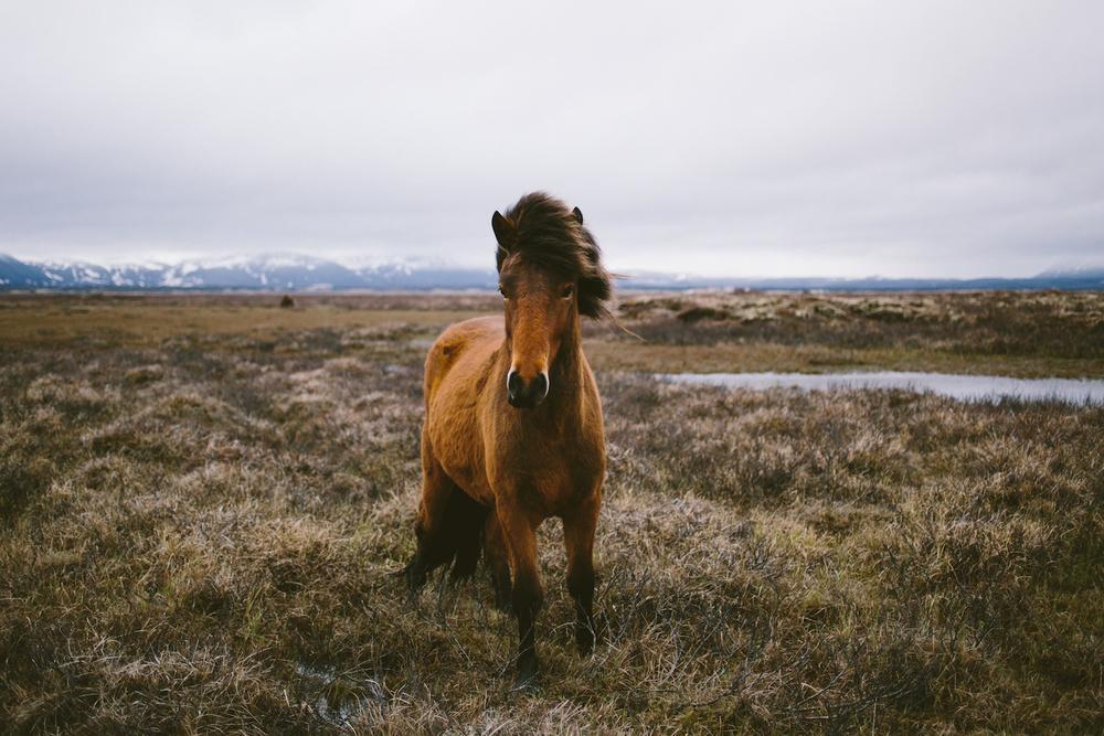 ICELAND-595-LA054760.jpg