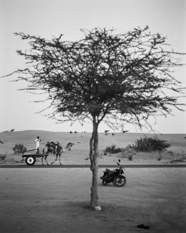 Rajasthan-206.jpg