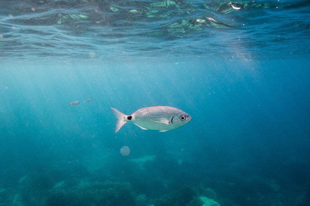celinehamelin-photographe-aquatique-freedive-apnee-sessionsportraits.jpg5.jpg