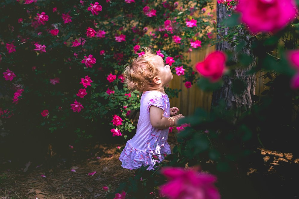 toddler-exploring-backyard-surrounded-by-roses